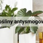 Oddychaj świeżym powietrzem, czyli domowe rośliny antysmogowe