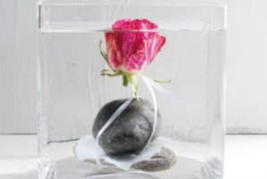 Odżywki dla kwiatów ciętych